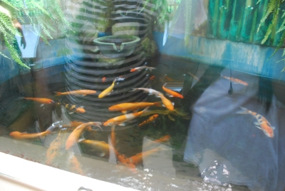 Gold fishes in fish pond are not gold just like the cross which became holy due to human words despite being untrue.